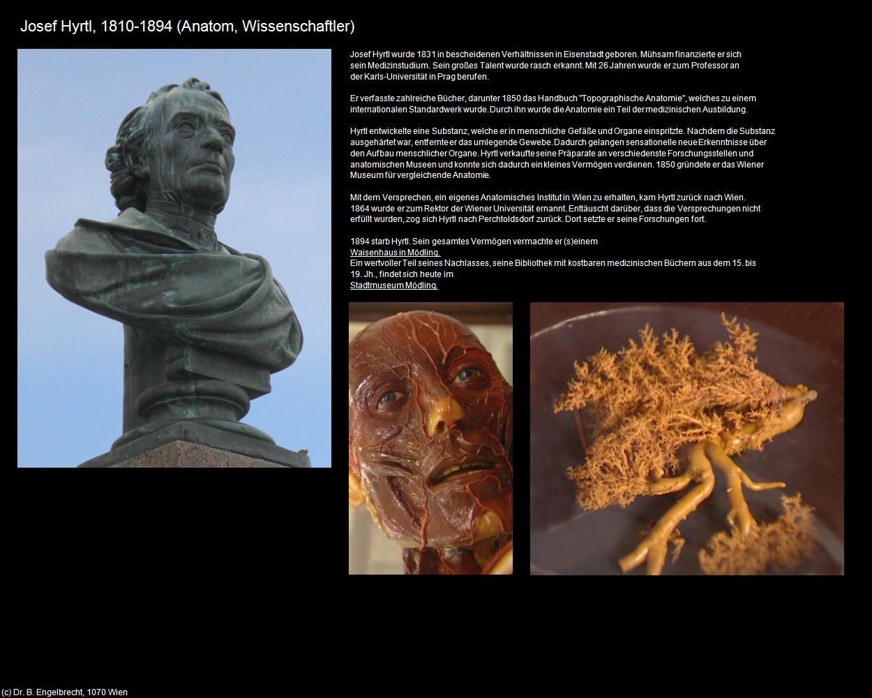 Erfreut Anatomie Und Physiologie Gewebe Bilder - Anatomie Von ...